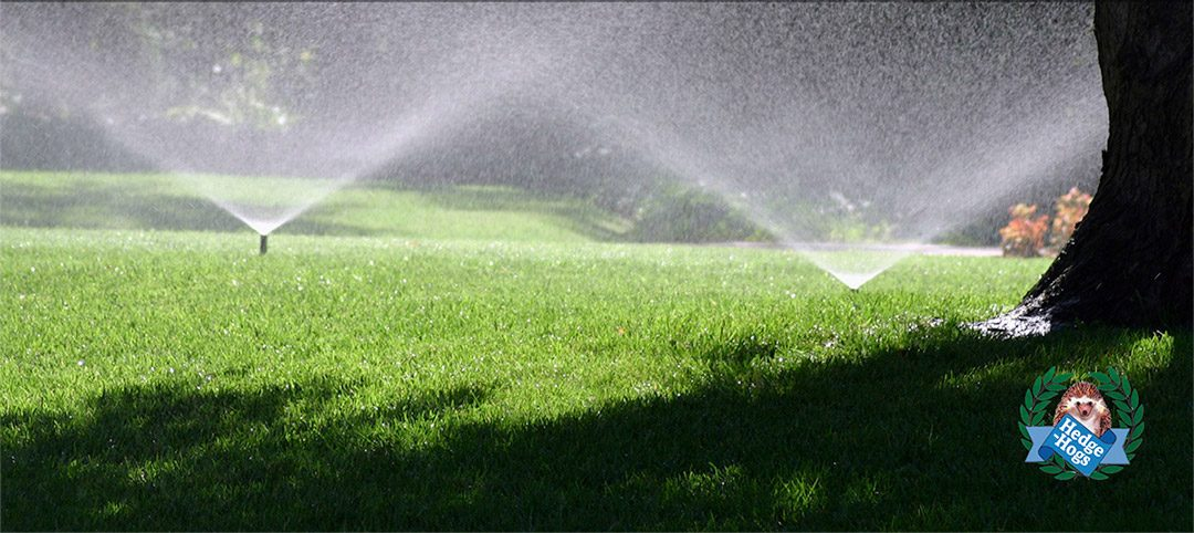 Hedge-Hogs Lawn Care Tips for healthy grass. Harrogate Landscaping