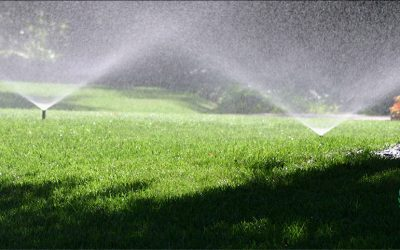 5 Lawn Care Tips for a Healthier Lawn