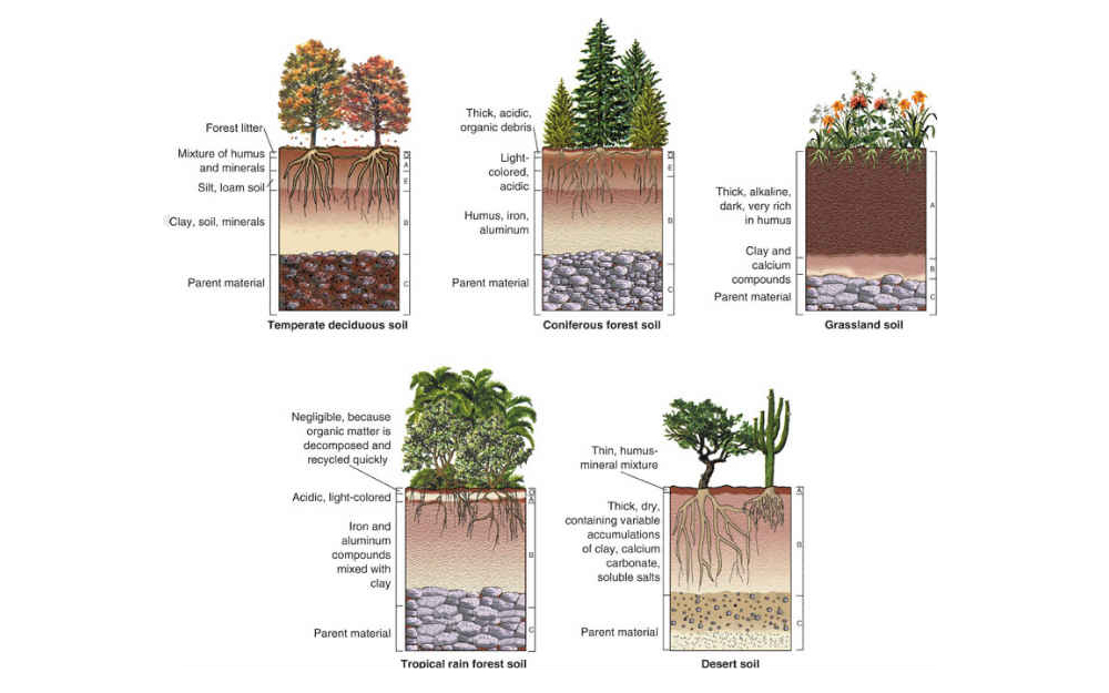 Hedge Hogs Harrogate Garden and Landscape Soil Types