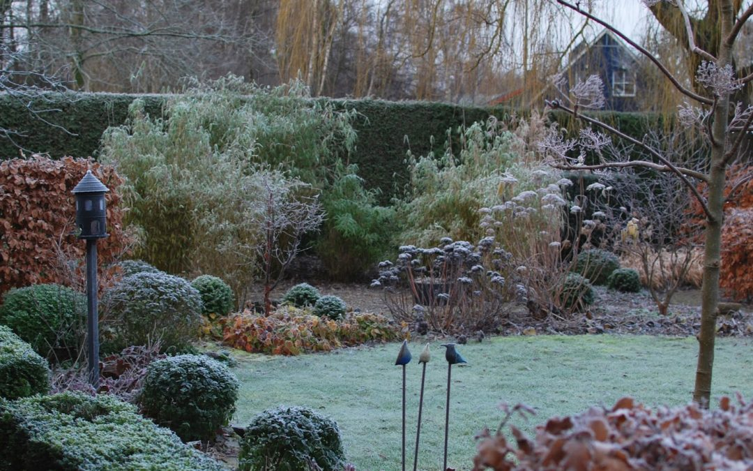 Brightening Up a Dull Winter Garden in Harrogate