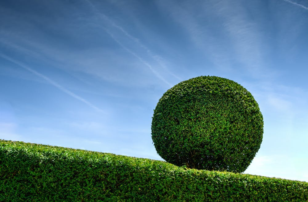 Hedge Cutting and Pruning Hedgehogs Outdoor - Landscaping and Maintenance in Harrogate