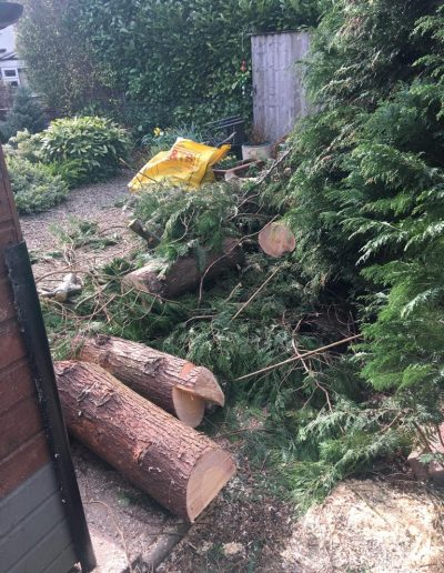 Tree Removal - Hedge Hogs Harrogate Landscape Gardening