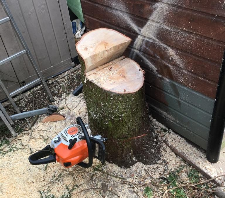 Tree Removal - Hedgehogs Outdoor - Landscaping and Maintenance in Harrogate